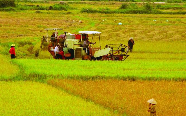 3 Tỉnh được phép chuyển mục đích sử dụng đất trồng lúa